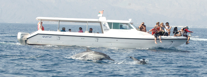 Dolphin Watching In The Sea