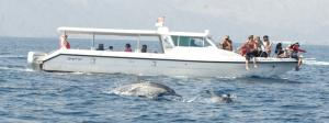 Dolphin Watching Tour In The Sea
