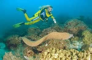 Explore Under Water Paradise Tour Packages