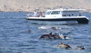 Dolphins Watching While Snorkeling Tour